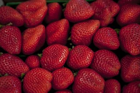 Strawberries by Sossi Madzounian art print