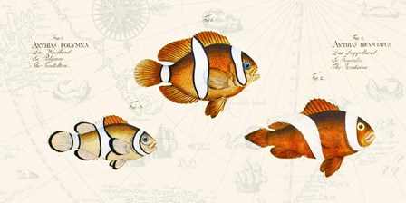 Tropical fish I, After Bloch by Stef Lamanche art print