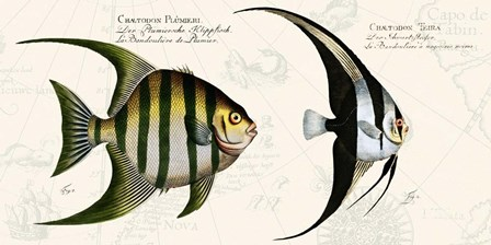 Tropical fish II,  After Bloch by Stef Lamanche art print