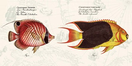 Tropical fish III,  After Bloch by Stef Lamanche art print