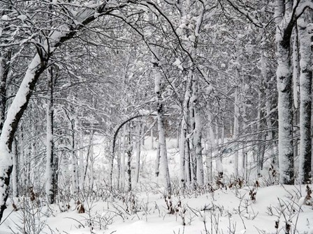 Trees In Snow by Clive Branson art print