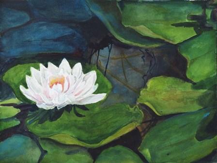 White Waterlily by Joanne Porter art print