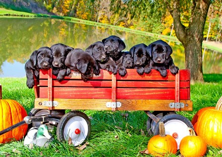 8 Lab Puppies by Dick Petrie art print