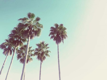 Palms Against The Evening Sky by Acosta art print