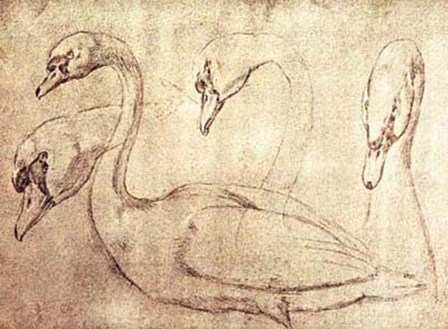 Sepia Swan Study by Ourry art print