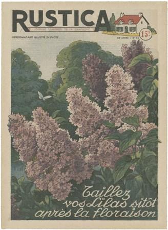 Plantez Des Lilacs art print