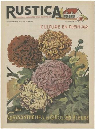 Plantez Des Chrysanthemes art print
