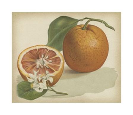 Orange Study I art print