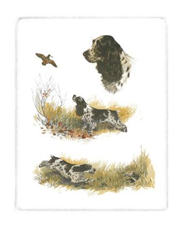 Cocker Spaniel by Rial art print