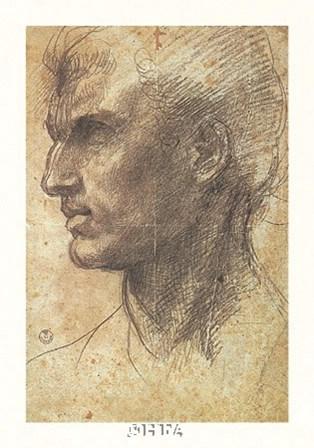 Head of an Apostle by Andrea Del Sarto art print