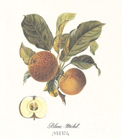 Apple/Blanc-Michel by Francois Langlois art print