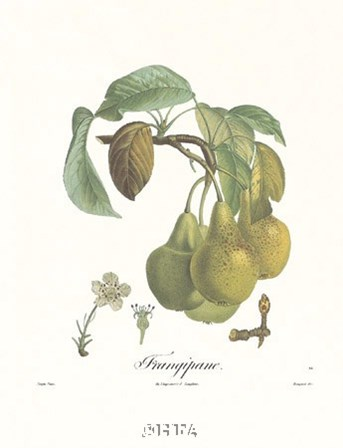 Pears/Frangipane by Francois Langlois art print