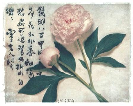Oriental Peony by Julie Nightingale art print
