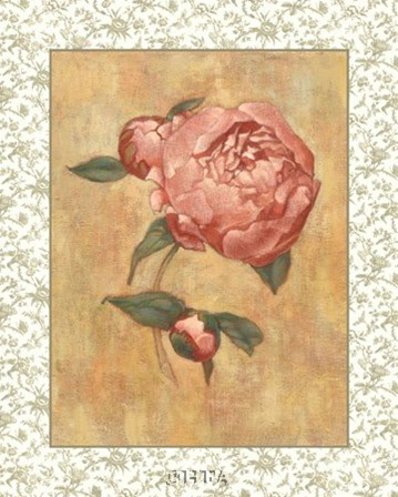 Antique Peony II by Linda Hanly art print