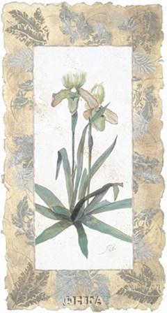 Elegant Orchid by George Caso art print