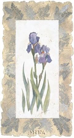 Emperor Iris by George Caso art print