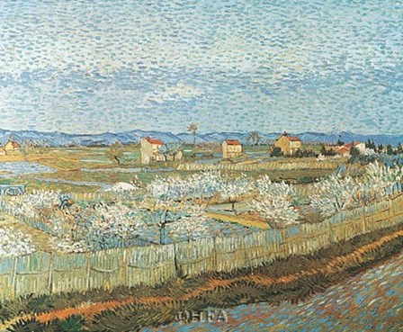 Orchard by Vincent Van Gogh art print