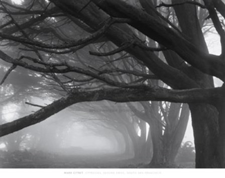 Cypresses, Skyline Drive, South San Francisco, 1996 by Mark Citret art print