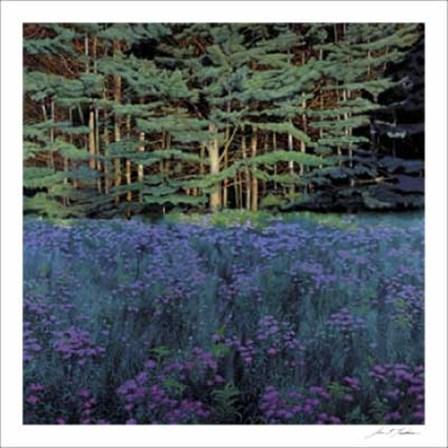 Shadowed Meadow, Sunlit Pines by Jon Friedman art print