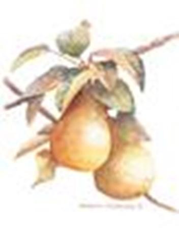 Pears by Sharon Pedersen art print
