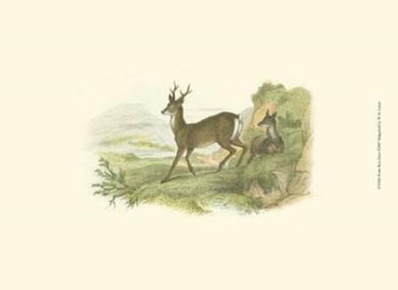 Petite Row Deer by W.h. Lizars art print