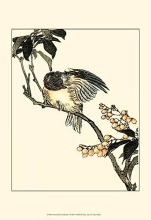 Oriental Bird On Branch V by Vision Studio art print