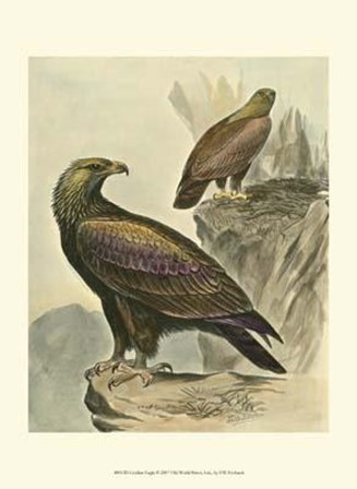 Golden Eagle by F.W. Frohawk art print