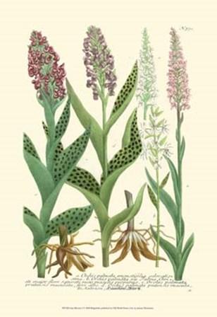 Lilac Blooms I by Johann Wilhelm Weinmann art print