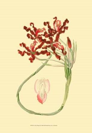 Le Fleur Rouge II by George Edwards art print