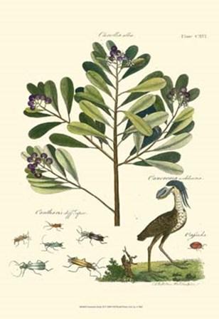 Naturalist Study II by Adam Schall Von Bell art print