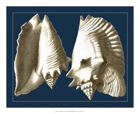 Conch Shells on Navy I by Vision Studio art print