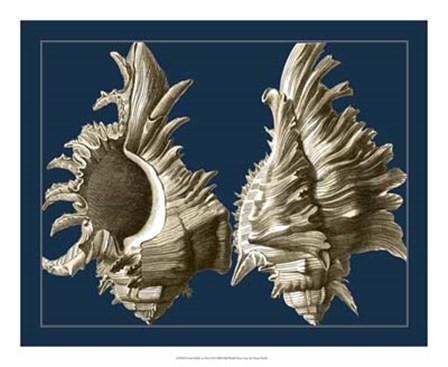 Conch Shells on Navy II by Vision Studio art print