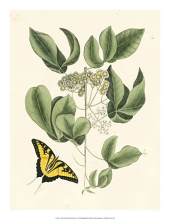 Butterfly and Botanical II by Marc Catesby art print