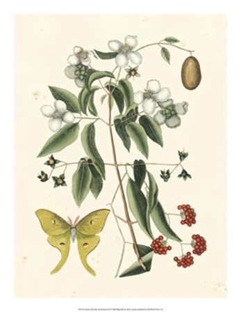 Butterfly and Botanical III by Marc Catesby art print