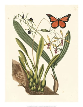 Butterfly and Botanical IV by Marc Catesby art print