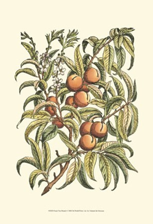 Peach Tree Branch by Duhamel De Monceau art print