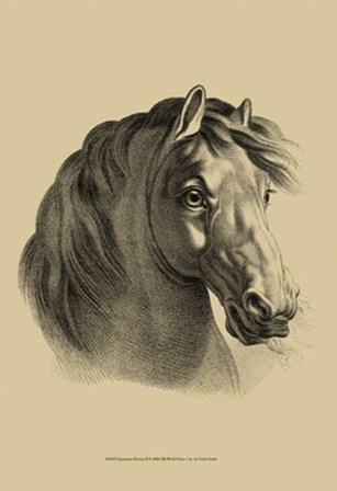 Equestrian Portrait II by Vision Studio art print
