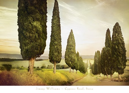 Cypress Road, Siena by Jimmy Williams art print