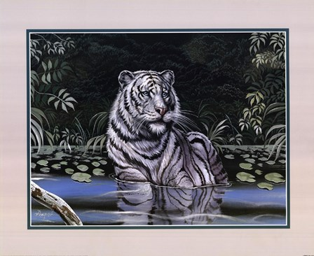 Wading White Tiger by Gary Ampel art print