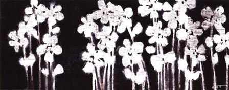 White Flowers on Black I by Norman Wyatt Jr. art print
