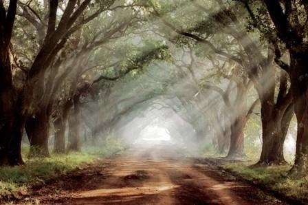 Evergreen Plantation A by Mike Jones art print