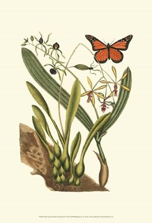 Sm Catesby Butterfly&Botan. IV (P) by Marc Catesby art print