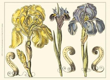 Custom Iris in Bloom I (U) by Claude Langlois art print