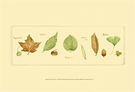 Leaves & Seeds II by Nancy Shumaker art print