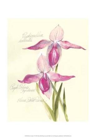 Elissa's Garden VI by Elissa Della-Piana art print