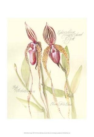 Elissa's Garden VIII by Elissa Della-Piana art print