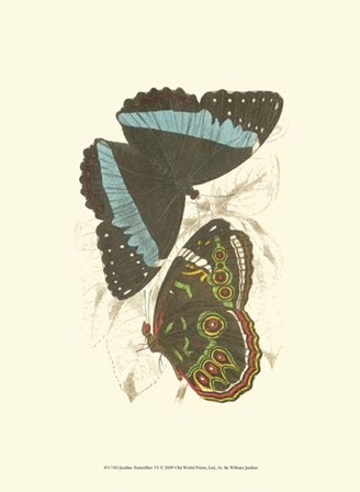 Butterflies VI by Sir William Jardine art print
