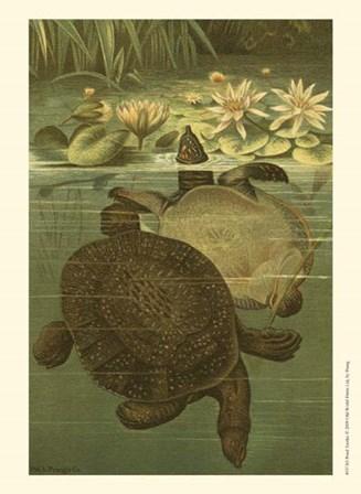 Pond Turtles by Louis Prang art print