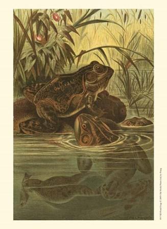 Pond Frogs by Louis Prang art print