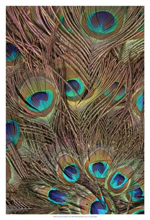 Peacock Feathers III by Vision Studio art print